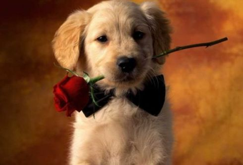 Valentines-Day-For-Pets-1
